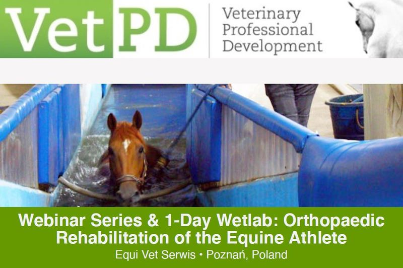 Orthopaedic Rehabilitation of the Equine Athlete