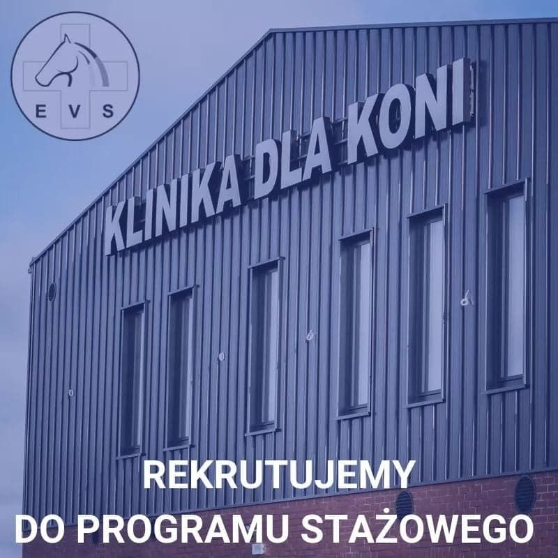 Rekrutacja do rotacyjnego Programu Stażowego EVS